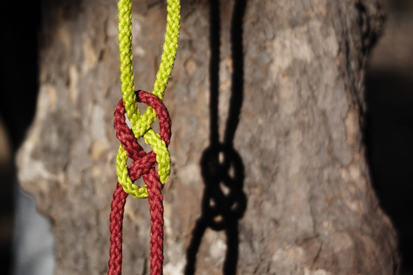Yellow and red rope in a loose know, a shadow sits to the right atop a rock face